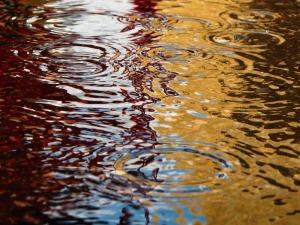 rain-puddle